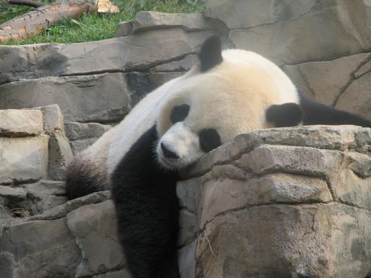 Panda Google Update 4.2